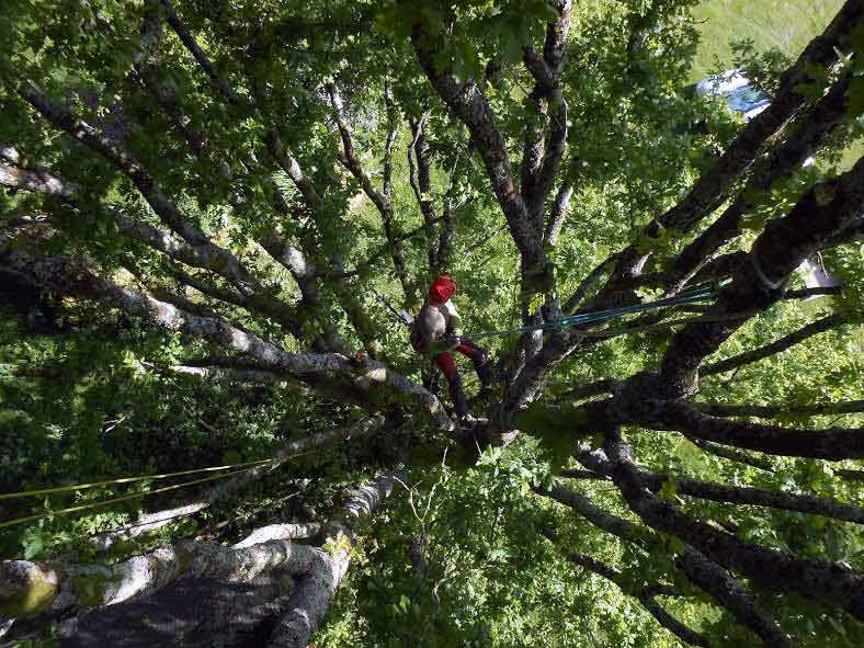 Mathias Hébert | Histoire d'arbres élagage